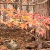 秋の太陽寺宿坊体験のすすめ〜紅葉と星の秩父旅・前編~