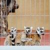 八木山動物公園⑥(2000年代)