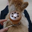 あきっと獣医のおうちでほっこり中医学ブログ