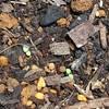 まだまだ小さな芽🌱