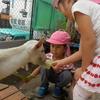 今日の幼稚園 求むヤギのエサ