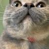 【猫と暮らす】やっと猫が新居に慣れてきた!【新居】