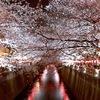 中目黒駅近く目黒川の花見スポット