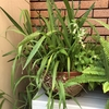 勝手に押しかけて来た雑草が、いい感じに茂っています