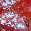 散歩~日比谷公園の紅葉は今がベスト!