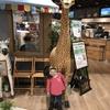 人気で混雑しやすい親子カフェ「カフェもりっちゃ赤羽店」
