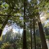 東京から車で道志村のキャンプ場へ行くのにオススメのルート〜食事・買い出しをワンルートで〜
