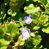 ブルーの花に声をかける