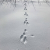 雪のうえの足跡シリーズ