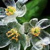 雨露の滴る姿も美しい。梅雨でも楽しめる花10選
