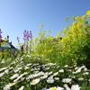 神原町花の会(花美原会)(323) 「花を楽しませていただいています」の一声