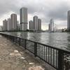 隅田川テラスランニング〜永代橋、相生橋、中央大橋をくるりと一周しました〜