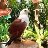 ジョグジャカルタのゲンビラ・ロカ動物園 (Gembira Loka Zoo)がオススメ!行き方や入園料は?