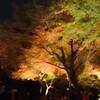 京都の紅葉…