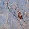 2019年2月16日の鳥撮り- 横浜市(2/2)