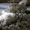 ギャアー!!初の降雪