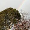 久しぶりの虹。