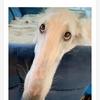 世界一?鼻の長い犬(ニコニコ ニュースより)
