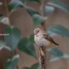 2019年1月20日の鳥撮り(1/2)-北関東の探鳥地(1/2)