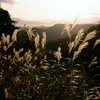 田沢湖高原を散歩3(秋田県仙北市)