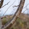 木々の幹の模様と色合い