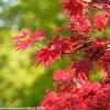奈良、長谷寺の魅力再認識 その2