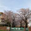 中央地区4か所の桜  (3月29日)
