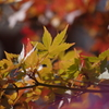 葉っぱのフレディ