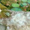 モリアオガエルのコドモが巣立つ…💕(*˘ー˘*)