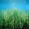 藻場について