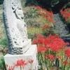 仏隆寺のヒガンバナ(9月中旬~下旬)