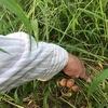 久々の畑は草ぼうぼう。素手と裸足で草抜き、アースで体の電磁波抜きと毒素抜き。