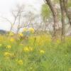 39.高知県 ~2012年4月 高知城と桜を楽しむ旅①~