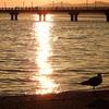 竹島海岸の夕陽 2016 11月