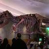Field museumに行ってきました