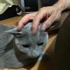 猫さんの写真が上手く撮れない件について。
