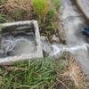 今年も中間施肥は流し込み施肥を行いました