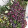 マンション花壇植え替え」