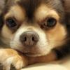 動物虐待と人権侵害について最近思っていたこと。結局思いやりがあればすべて解決できると思う。