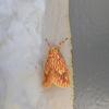 コケを食べる蛾
