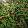 5月7日花と花言葉・歌句