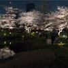 2017年桜撮影/毛利庭園(六本木ヒルズ)