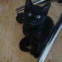 保護猫モモ&ナナのブログ!