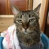 猫アレルギーの方の滞在のための準備をしたよ