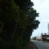 写真で振り返る人生初の沖縄旅行4日目-6日目