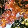 秋山を楽しむ 押さえておきたい三つのポイント