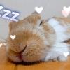 うさぎのお顔マッサージにまさかの本人がメロメロ!?YouTubeで毎週かわいいうさぎ動画を配信中