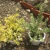 プリペット 葉が生い茂る