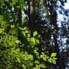 芒種の梶ヶ森遊山 雨上がり