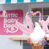つんく♂作詞作曲アイドルも撮影! 大須のリトルベビードッグス (Little Baby Dog's)のソフトクリームは可愛すぎてインスタ映えだぞっ! #リトルベビードッグス